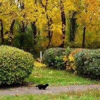 Осенняя прогулка :: Владимир Брусенцев