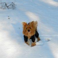 зимняя прогулка :: НАДЕЖДА КУЖЕЛЕВА