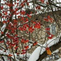 яблочки на снегу :: gribushko грибушко Николай