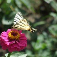 Бабочка :: Артем Ю