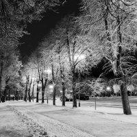 Снежное утро :: Евгений Никифоров