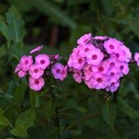 Цветы_033 :: Владимир Кроливец