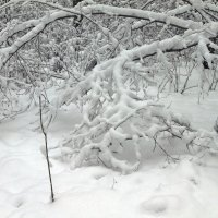 Зима. :: Yuri Chudnovetz