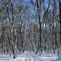 Лес зимой :: Yarik Minakin