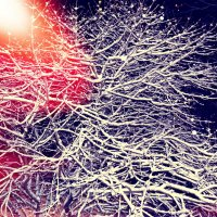 Снежное утро 5 декабря 2013 года | Snowy morning, December 5, 201 :: Pavel Kochunov