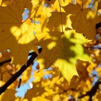 Golden leaves :: Дмитрий Каминский