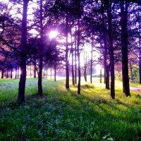 иноземный лес :: Эльза Королёва