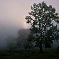 Утро туманное :: Евгений Юрков