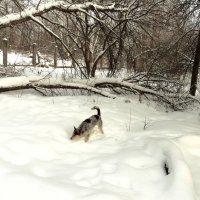 Зимняя прогулка-2 :: Лариника Кузьменко