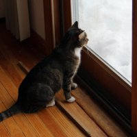 Во снега насыпало! :: Яков Геллер