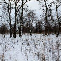 первый снег :: Tania D