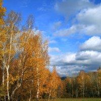 Золотая осень :: Евгений Юрков