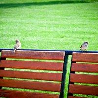 Birds :: Владимир Грин