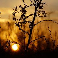 прячущееся солнце... :: Ирина Лядова