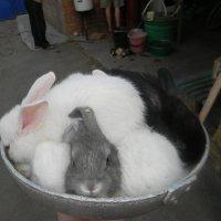 Блюдо аля-кролики :: Алексей Свириденко