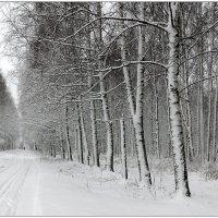 Графика зимы :: Николай Белавин