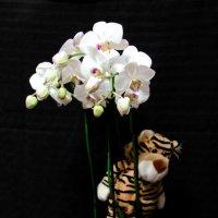 и даже тигрята любят цветочки))) :: Александра Минич