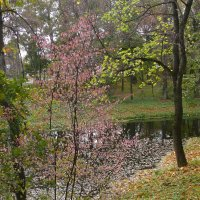 Осень в Ясной поляне :: Светлана Воронкова