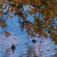 Вечером у озера :: Владимир Бегляров