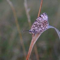 бабочка :: Наталья Маркелова