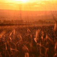 на холме меж травы :: Наталья Маркелова
