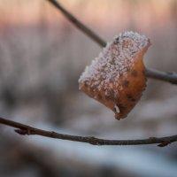 Замерзшая осень. 18.12.2013 :: Даба Дабаев