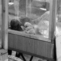 На птичьем рынке :: Виктор Баштовой