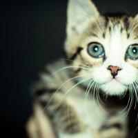 Красавчик - кот :: Анечка Счастливая