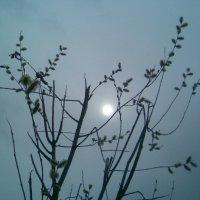 Весеннее солнце :: Ольга Ларионова