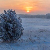 Зимнее утро :: Виктор Ковчин