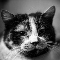 Kitty :: Антон Опанасюк