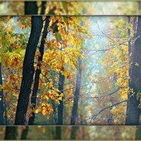 В дубовой рощице туман заплутал... :: Olenka