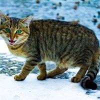 Охотник на пруду :: Sunny_cat -