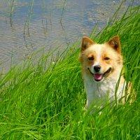 Собака улыбака :: Екатерина NiKa