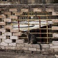 а вот,ещё один представитель всё той же стены-из серии Кошки очарование мое! :: Shmual Hava Retro