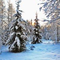 валдайские зарисовки(ели в снегу) :: юрий макаров