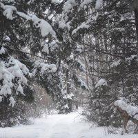Дорога в зимнем лесу :: Светлана Франчук