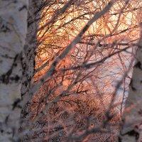 Зимнее утро :: Евгений Кузнецов