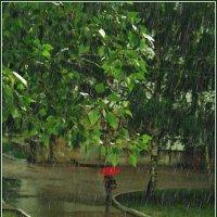 Дождик в четверг :: Евгений Юрков