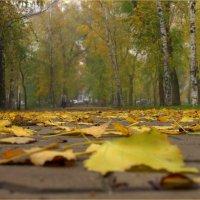 Осень :: Лариса