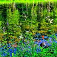Там, где  растёт  цветочек  Аленький. :: Vlad Borschev