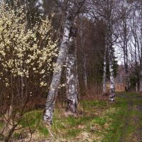 весна идёт :: liudmila drake