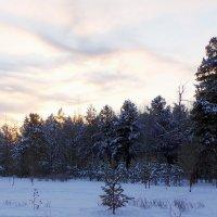 морозное утро :: Олег Петрушов