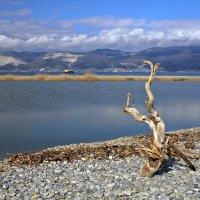 Дерево морского друида :: Константин Николаенко