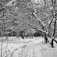 Снег :: Александр Садовский