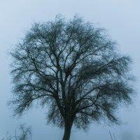 Дерево жизни :: Роман Хоменко