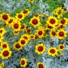 цветы :: валерий