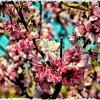 Цветы :: Alexander Demetev