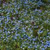 Ситцевая весна :: Павел Руденко