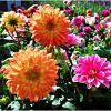 Краски лета. :: Валерия Комова